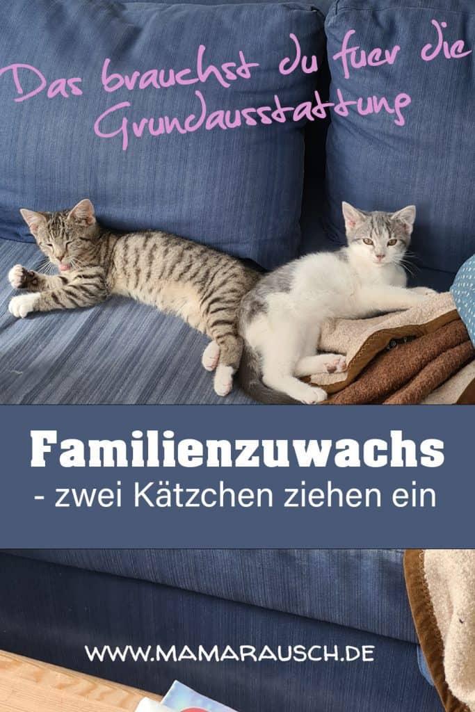 Grundausstattung zur Eingewöhnung von Kätzchen